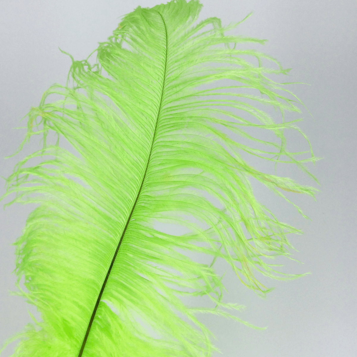 Ostrich Femina Feathers Lime Green Medium